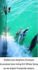 sam_dolphins